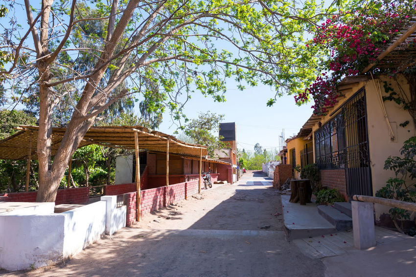 Street in Ica, Peru where many pisco distilleries are located Agriculture Architecture Building Exterior Built Structure Green Ica Latin America Peru Pisco Plant Road Sky South America Vine Vineyard