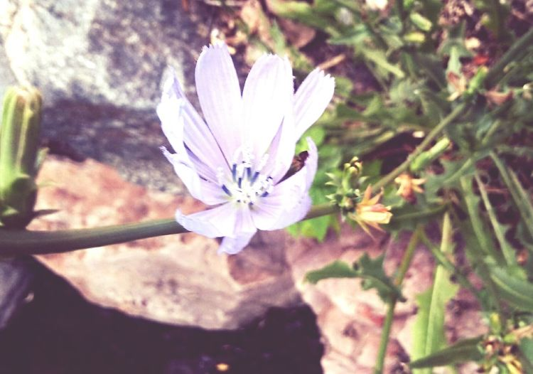 Flower Purple Rocks Creekside Flowing Walking Path Nature Spotted Tiny Photography Nature Photography Nature Lover Suspended Water Check This Out Enjoying Life Outdoors