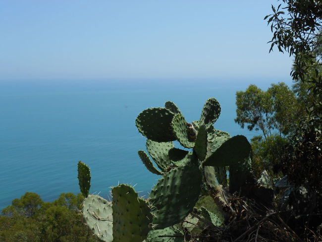 Beauty In Nature Blue Cactus Coastline Day Growth Horizon Over Water Idyllic Mediterranean  Mediterranean Sea Nature No People Non Urban Scene Non-urban Scene Outdoors Plant Remote Scenics Sea Sky Succulents Tranquil Scene Tranquility Tree Water