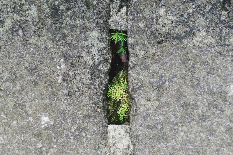 High angle view of plant growing on wall