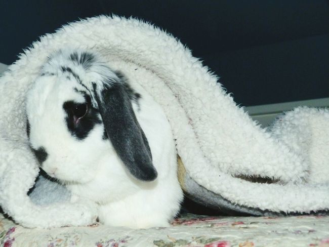 Pet Portraits Bunny  Cute Cozy