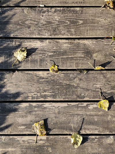 High angle view of yellow leaves on wooden plank