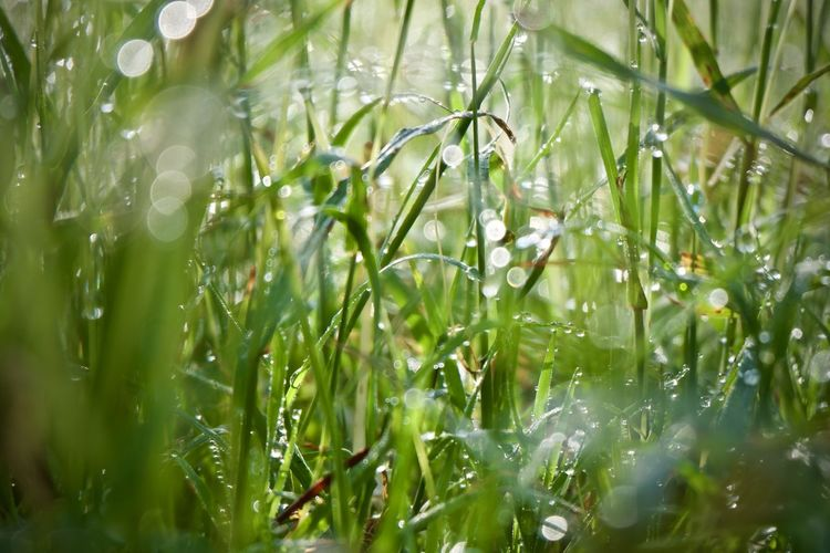 Plant Growth Beauty In Nature Water Drop Green Color Nature Wet Selective Focus Day No People Close-up Field Land Rain Freshness Grass Outdoors Tranquility Dew Blade Of Grass RainDrop Purity
