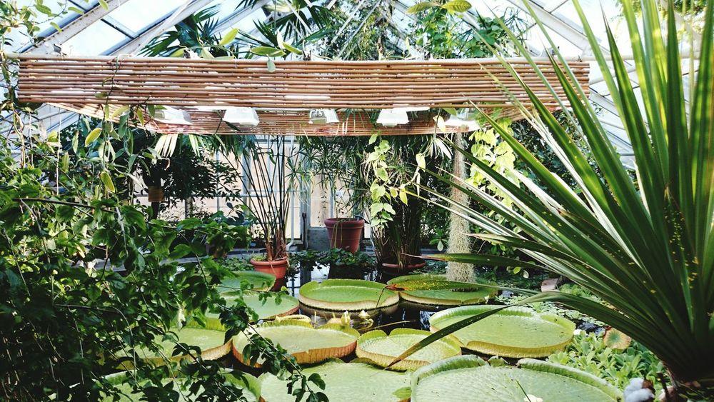 Plants Exotic PalmHouse
