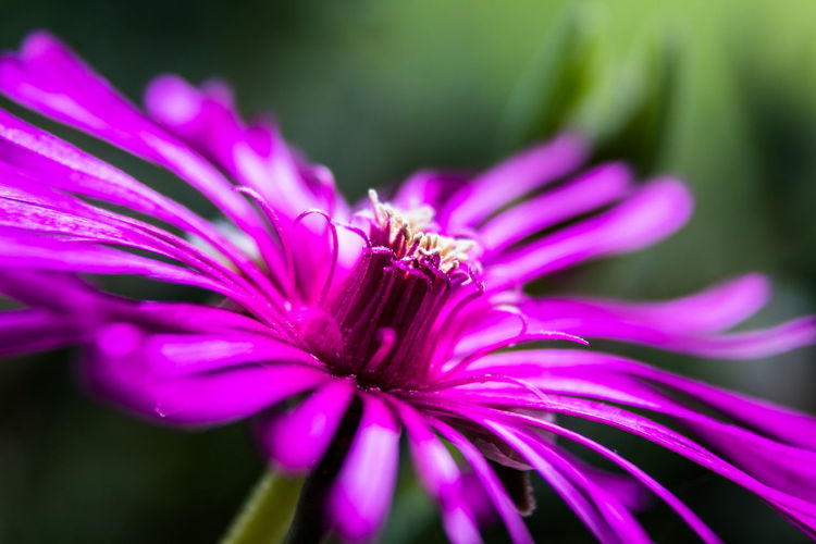 Beauty In Nature Close-up Flower Flowering Plant Fragility Freshness Growth Nature No People Outdoors Petal Pink Color Plant Pollination Purple Vulnerability