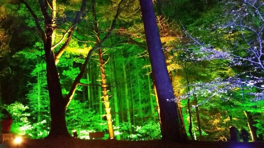 Enchanted Forest Coloured Trees Tree Multicoloured Lit Up With Lights Bright Forest Forest At Night Spooky No People Forres Woods Woods Lit Up Nature Green Lights