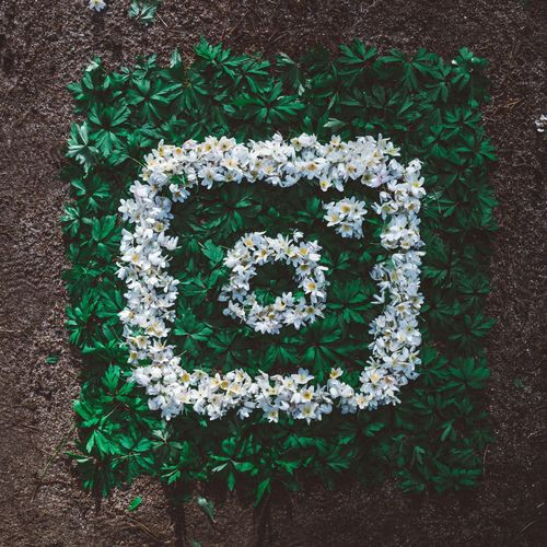 Flower Plant Green Color Growth Directly Above Nature No People High Angle View Freshness Outdoors Day Leaf Fragility Close-up Instagramlogo Instagram Earthday EarthDay2017 Spring Logo Logo Design Nature Naturelovers Outdoor Colorful