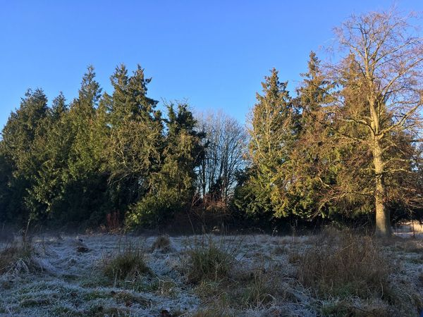 Frost Tree Nature Growth Beauty In Nature Tranquility Blue Sky No People Non-urban Scene Outdoors Clear Sky Day