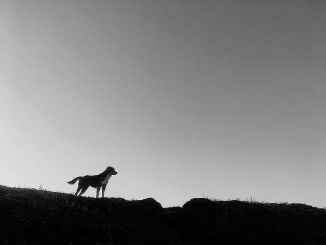The dog that see GodAnimals In The Wild Silhouette No People Animal Wildlife Clear Sky Sunset Nature Sky Cute Doggy Lovely Love Animals💕 Nature_collection Melancholic Landscapes