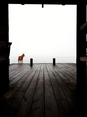 dog on a dock of the bay Haze Hazy  Gazing Fog Foggy Lines Leading Lines Pet Dog Full Length Bird Rear View Pier Underneath Jetty Stilt House Wooden Post Wood Paneling Boat Dock Marina Waterfront Ocean Autumn Mood
