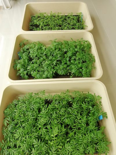 High angle view of plants in container