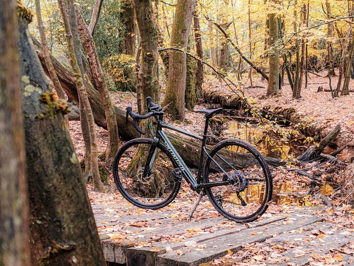 Bicycle parked on tree trunk in forest
