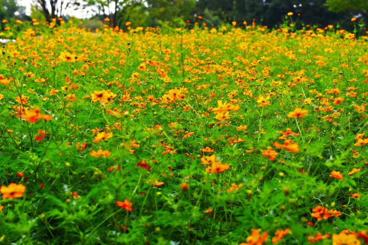 Beauty In Nature Blooming Blossom Day Field Flower Flower Head Flowerbed Formal Garden Fragility Freshness Green Color Growth In Bloom Nature No People Non-urban Scene Petal Plant Selective Focus Springtime Uncultivated Vibrant Color Wildflower Yellow