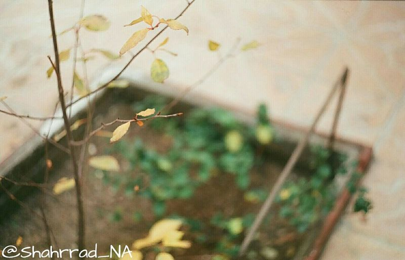 Art هنر Photography Flower Photo Shahrrad_NA