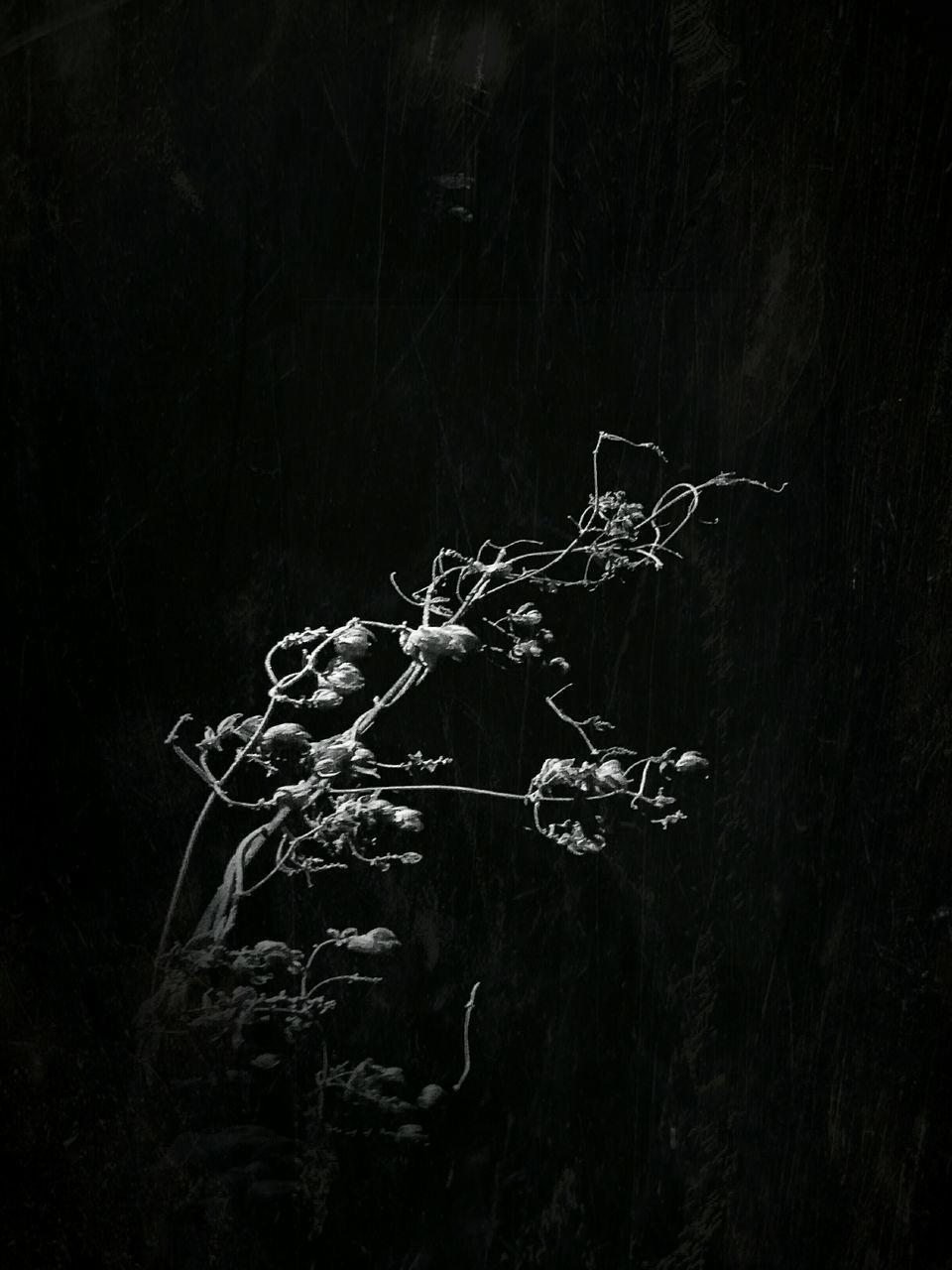 Close-Up Of Plant At Night