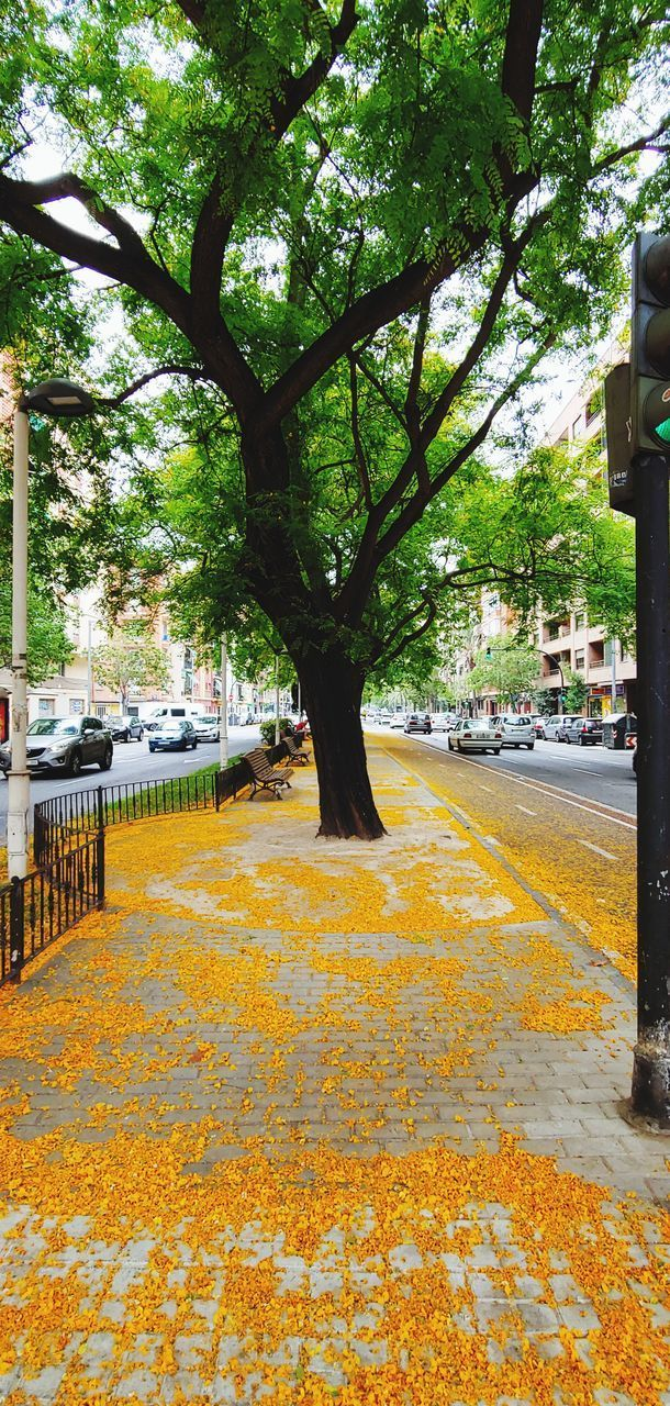 tree, plant, tree trunk, trunk, architecture, yellow, built structure, growth, city, day, nature, transportation, no people, building exterior, road, street, footpath, outdoors, the way forward, park, long, treelined