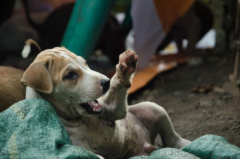 Stray puppies on field