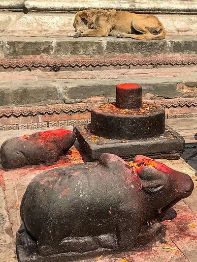 Scene at Pashupatinath Temple, Bagmati Kathmandu Nepal Dog Hindu Culture Hindu Temple No People Place Of Worship Sleeping Statues Temple