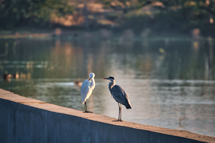 Birds perching on lake