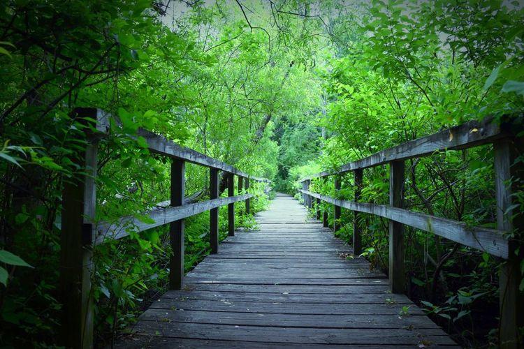 Bridgewalk in Indiana Dune Hollow Park