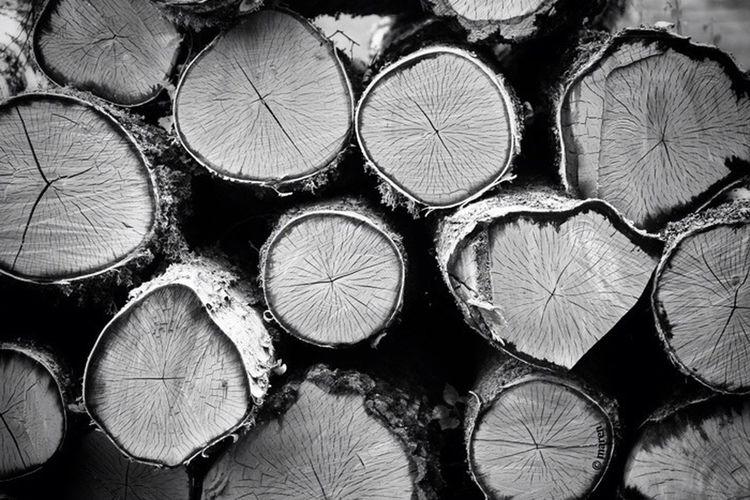 Timber! Blackandwhite Bw_lover Bw_collection Eye4black&white