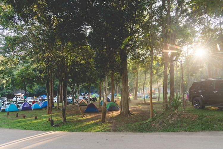 Camping Camping Tree Plant Nature Sunlight Growth Transportation Tree Trunk Trunk Day Outdoors Green Color No People Beauty In Nature Land Sky Park Park - Man Made Space Road Grass My Best Travel Photo