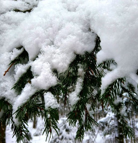 Nature Tree No People Growth Snow Day Outdoors Winter Cold Temperature Close-up Plant Beauty In Nature Sky