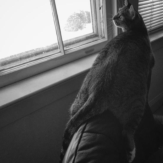 Daydreaming Catcoon...... Hello World Catoftheday Presentmoment FelineDomesticus Blackandwhite Hanging Out