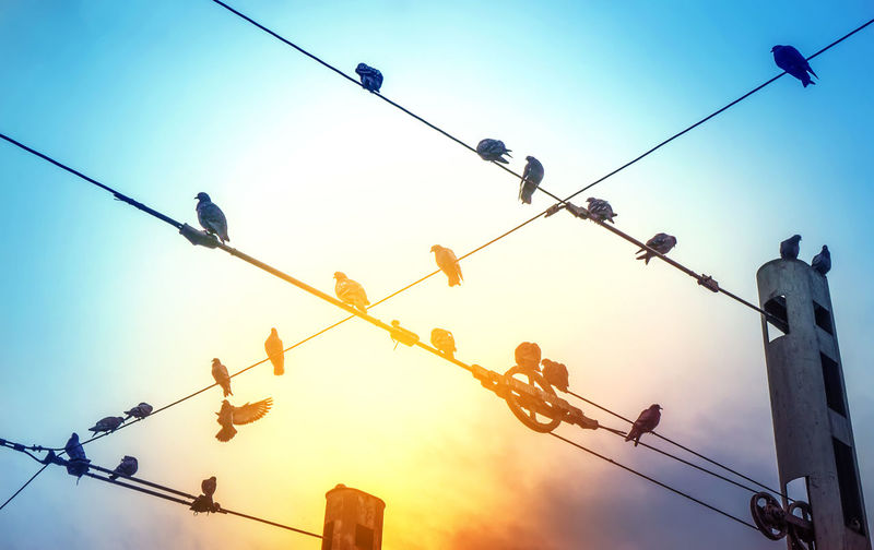 Freedom God Peace Animal Themes Animals In The Wild Bird Cable Clear Sky Connection Day Electricity  Enjoying Life Hanging Lifestyles Low Angle View Nature No People Outdoors Perching Power Line  Silhouette Sky Sunset Telephone Line