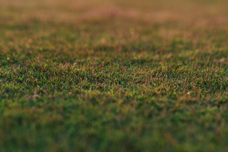Grass Selective Focus Grass Green Color Plant Full Frame Backgrounds Land No People Nature Field Beauty In Nature Day Sport Outdoors Growth Close-up Environment Tranquility Landscape Textured  Surface Level