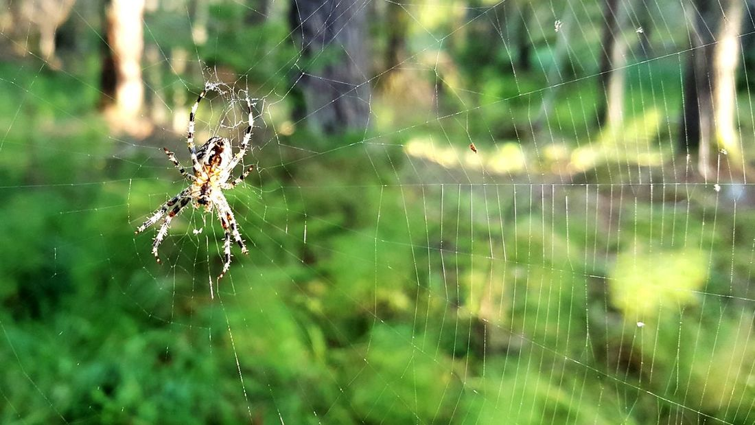 Spider Spider Web Animal Wildlife No People Nature Day Outdoors Close-up One Animal Animals In The Wild Sunlight Tree Trunk Forest Nature Hiking