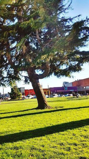 Arcata California Plaza. Taking Photos Magic... Loving Life! ! ! Hidden Gems