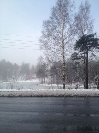 There is Fog outside :D Nature Taking Photos Winter btw this photo is natural and unedited <3