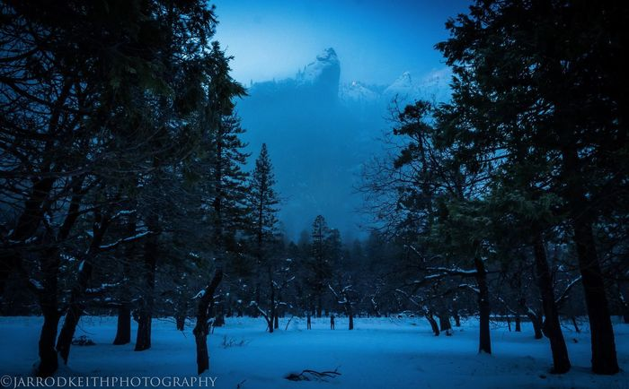 Yosemite national park. Need I say anymore? Tree Winter Cold Temperature Snow Season  Tranquil Scene Tranquility Landscape Weather Scenics Nature Beauty In Nature Non-urban Scene WoodLand Growth Outdoors Sky Snow Covered Day Remote Yosemite Yosemite National Park Dark Moody Contrasting Colors