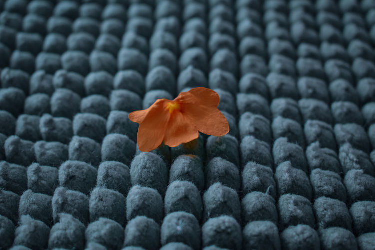 Flower on textured fabric
