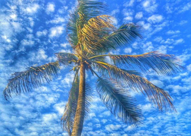 Palm Trees Island View Sea Islandlife Photographer Hobby Iphonephotography IPhoneography Photography