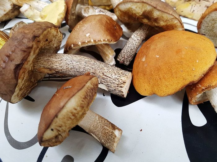 Mushroom Harvest Finding Mushroom EyeEm Selects Food And Drink Food High Angle View Healthy Eating Indoors  No People Freshness Close-up