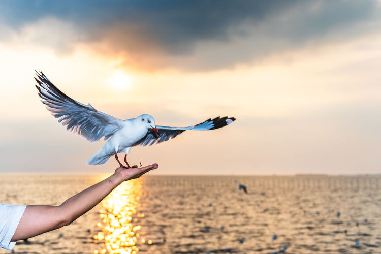 Low angle view of seagull flying over sea against sky