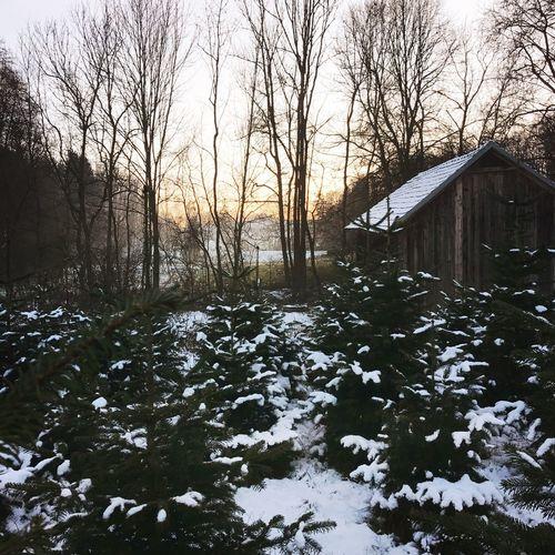 Nature Frozen Christmas Tree