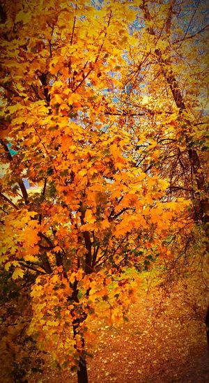 Full Frame Orange Color Nature Backgrounds No People High Angle View Outdoors