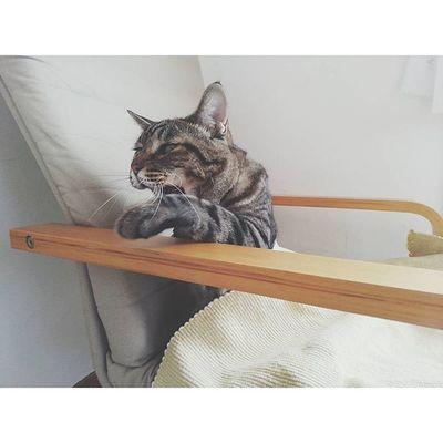 顔がホラー👻👻 . 手すりに手をかけようとした瞬間、アクビが出てこんな顔に。笑 朝晩、肌寒いほどになってきたので金太郎もゆっくりと冬支度。。✲ . 座椅子などフワフワした物を欲するように。笑 猫 ねこ 猫さんとの生活 にゃんだふるらいふ ねこ部 金太郎kintarou cat_stagram nekostagram animals_cuts world_kawaii_cat instagram_cat vscocam vscocat