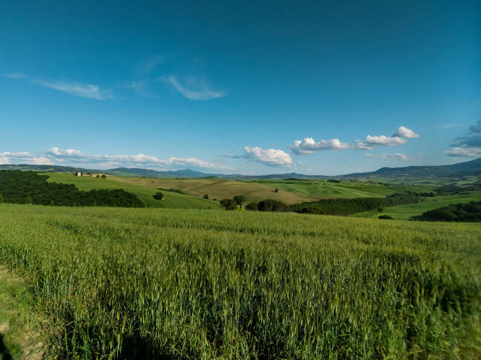 Tuscany's landscape Rural Scene Tree Tea Crop Agriculture Blue Cereal Plant Field Hill Backgrounds