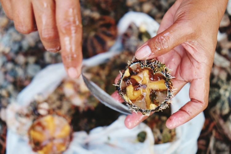 """swaki"" Close-up Hands Eating Spoon Sea Urchin Seafoods Raw Food Adventure Human Hand Men Beach Holding Seafood Sea Life Sea Fishing Close-up Fisherman"