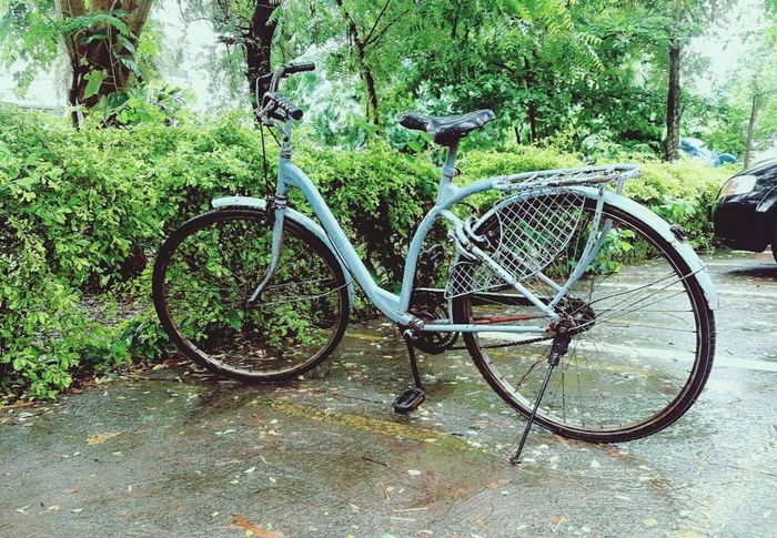 Bicycle Outdoors Land Vehicle Day Growth No People Nature Green Color Freshness Lifestyles Nature