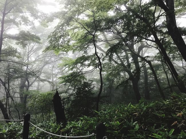 JEJU ISLAND  Tree Nature Forest Day Growth Outdoors Branch Fog Beauty In Nature