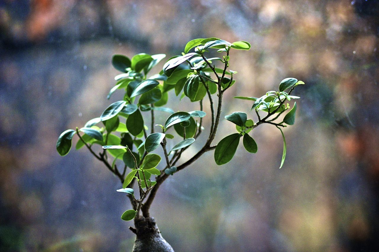 growth, nature, plant, leaf, no people, day, beauty in nature, focus on foreground, outdoors, close-up, fragility, green color, flower, freshness