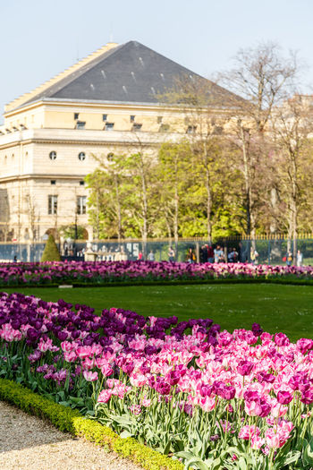 Architecture Beauty In Nature Building Exterior Built Structure Day Flower Flower Head Flowerbed Fragility Freshness Grass Growth Le Jardin Du Luxembourg Nature No People Outdoors Plant Sky Tree Tulip Water