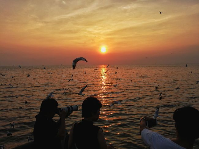 Bangpu Recreation , Samut Prakan province, Thailand BangPu Recreation Center Seagull Bangpu Samutprakarn In Thailand สถานตากอากาศบางปู Sunset Silhouette Animal Animal Wildlife Bird Sea Sun