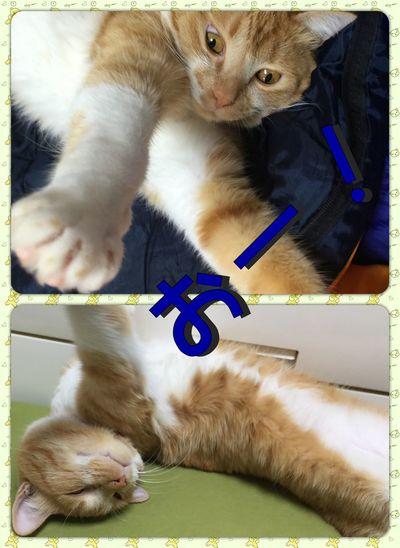 おー! 猫 IPhone写真