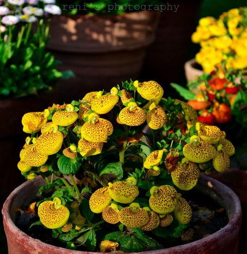 EyeEm Best Shots - Flowers Flowers,Plants & Garden First Eyeem Photo